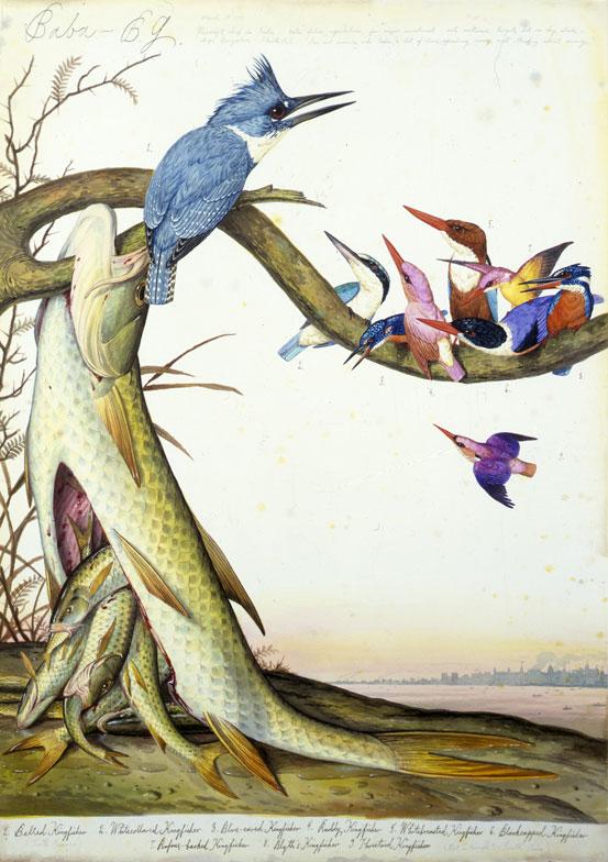 Alle Vögel sind schon da. (Abdruck mit freundlicher Genehmigung des Museum für Gegenwart Berlin. Walton Ford, Baba-B.G., 1997, Aquarell, Gouache, Tinte und Bleistift auf Papier, 105.1 x 74 cm, © Walton Ford, Courtesy Paul Kasmin Gallery.)