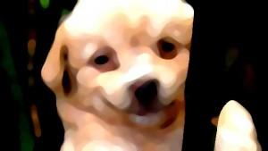 Hundemode: Wie kleide ich meinen Hund wetteradäquat?