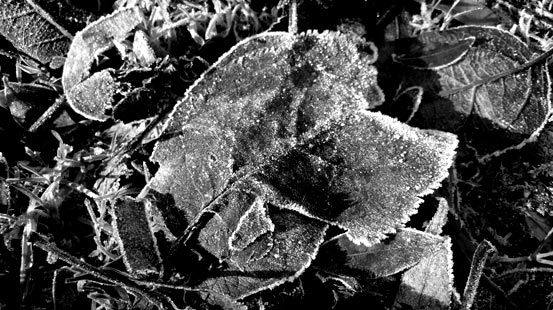 Frost in NRW