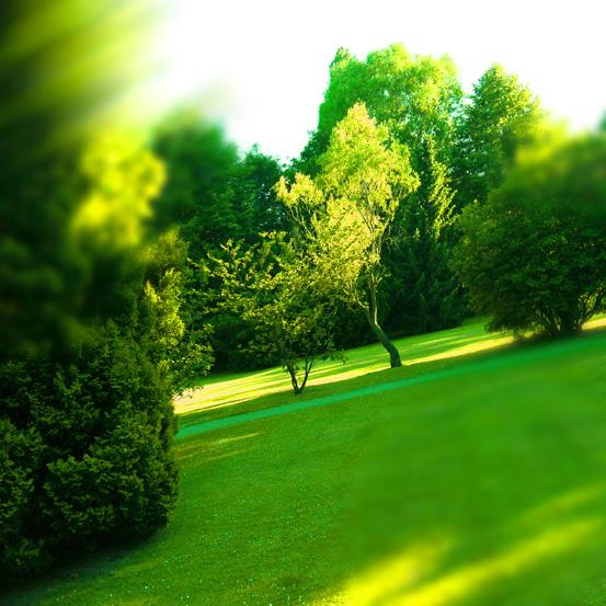 Schönes Grün