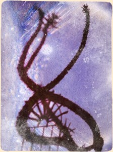 Schattenmorvelle