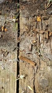 Niagara: Holzfälle