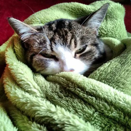 Katze kuschelt