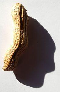 Erdnussgesicht