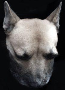 Hundeschnurren
